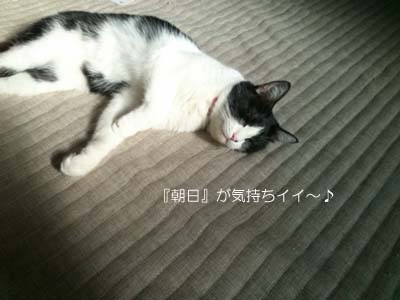 sakura asahi.jpg